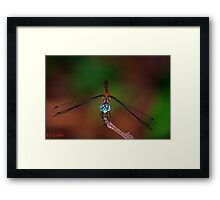 Hello, There.. Framed Print