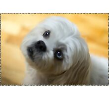 ♥♥My Eyes Adore You U Know I luv U Right ♥♥ (Puggsy)♥♥♥ Photographic Print