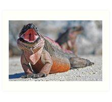Iguana Yawning Art Print