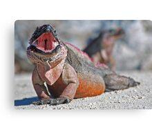 Iguana Yawning Canvas Print