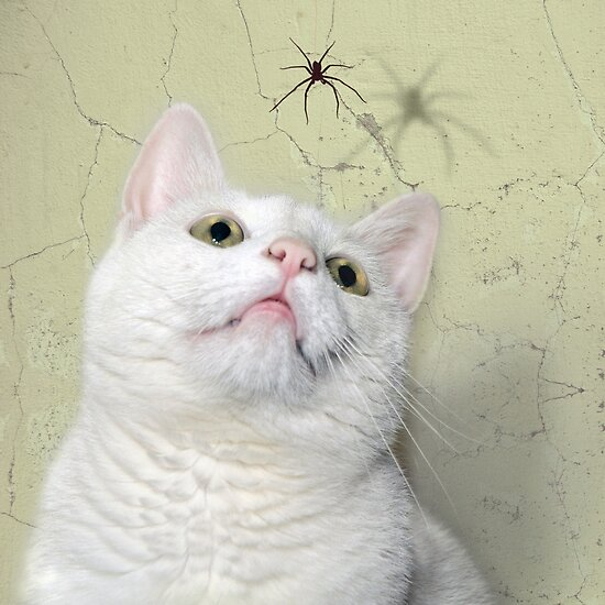Cat Bo by Lifeware