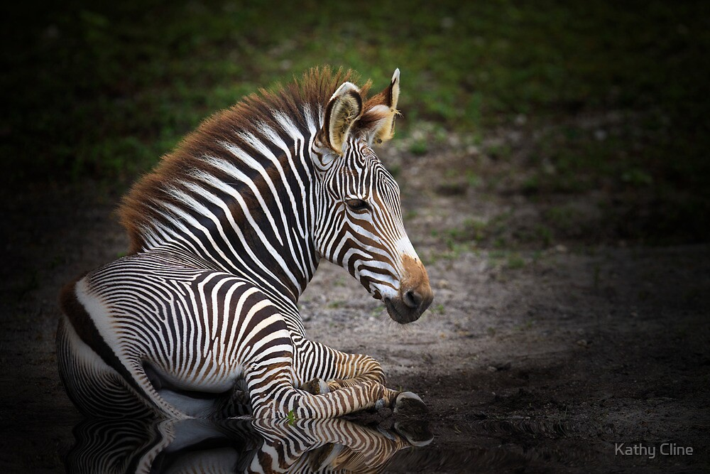 Zebra Baby by Kathy Cline