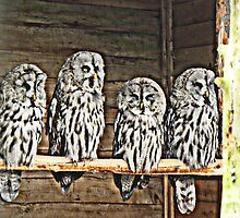 Four Wise Men by alittlebird