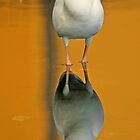 White ibis and reflection 2 by jozi1