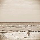 At The Beach by Paul Louis Villani