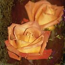 The Beauty of a Rose by Pat Moore