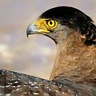 Eagle's Flight by srijanrc