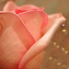 His Love For Her Was Woven Within Each Petal On The Rose by Ainsley Kellar Creations