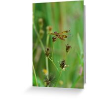Brown dragonfly on Spanish Needles Greeting Card