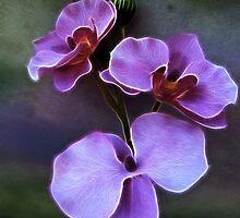 Pretty in Purple by suzannem73