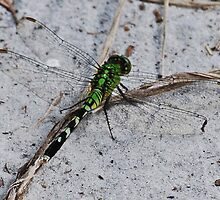 Green Dragonfly in the Sand by Diane Blastorah