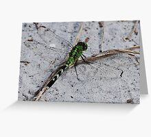Green Dragonfly in the Sand Greeting Card
