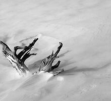Snowdrift log by daskibum