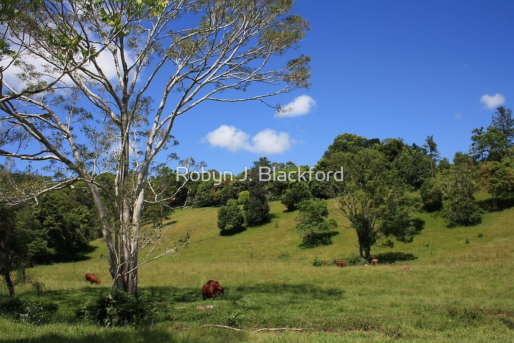 Tallebudgera Valley, SE Queensland. by aussiebushstick