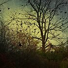 Bird Tree  by KFuoco