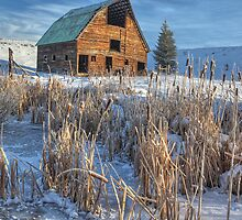 Old Barn Amidst the Cattails (Steamboat Springs, Colorado) by Brendon Perkins