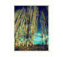 The Cloud Reaching Trees : Washington Art Print