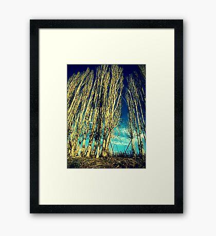 The Cloud Reaching Trees : Washington Framed Print