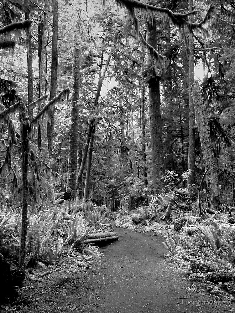The Path ~ Black  & White by Lucinda Walter