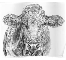 Cow Sketch Poster