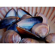 Mussels & Clams Photographic Print