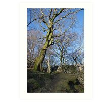 Mawddach Trail No1 Art Print