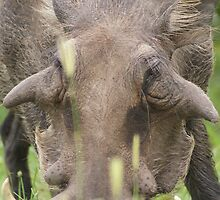 They call me Mr Pig! by Tara Pirie