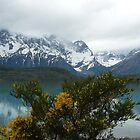 Torres del Paine - Chile by fraukevelghe