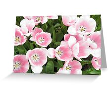 Flowers of the Netherlands Greeting Card