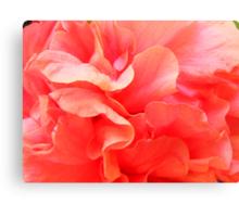 La Vie en Rose, Floral time series Canvas Print