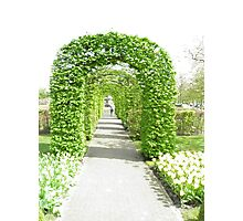 Flowers of the Netherlands Photographic Print