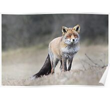 Red Fox - 1689 Poster