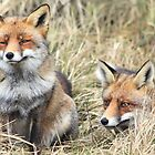 Foxes - 1716 by DutchLumix