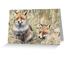 Foxes - 1716 Greeting Card