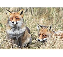 Foxes - 1716 Photographic Print
