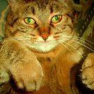 Rub my belly please!!! by Dmarie Becker