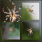 SpiderCollage by RosiLorz