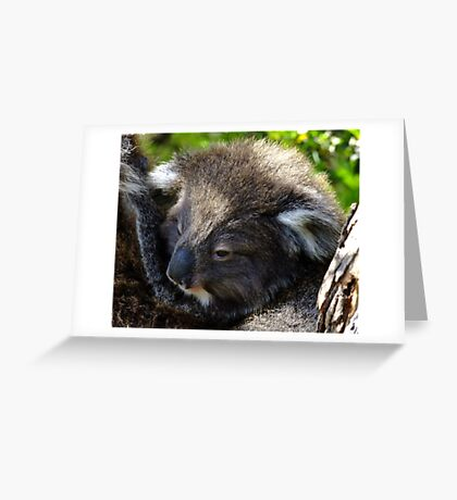 Koala on the roadside - Victoria Greeting Card