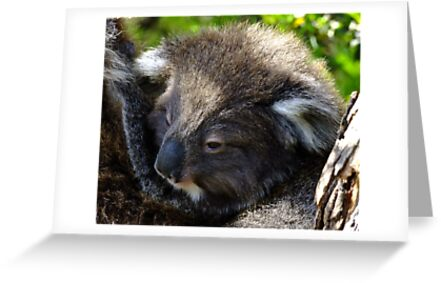 Koala on the roadside by Karen Stackpole