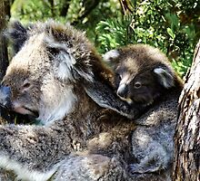 Holdin on to mum - Victoria by Karen Stackpole