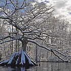 Remarkable Tree in Winter by Michele Conner