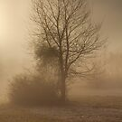Early Morning Fog by MissMoon2009