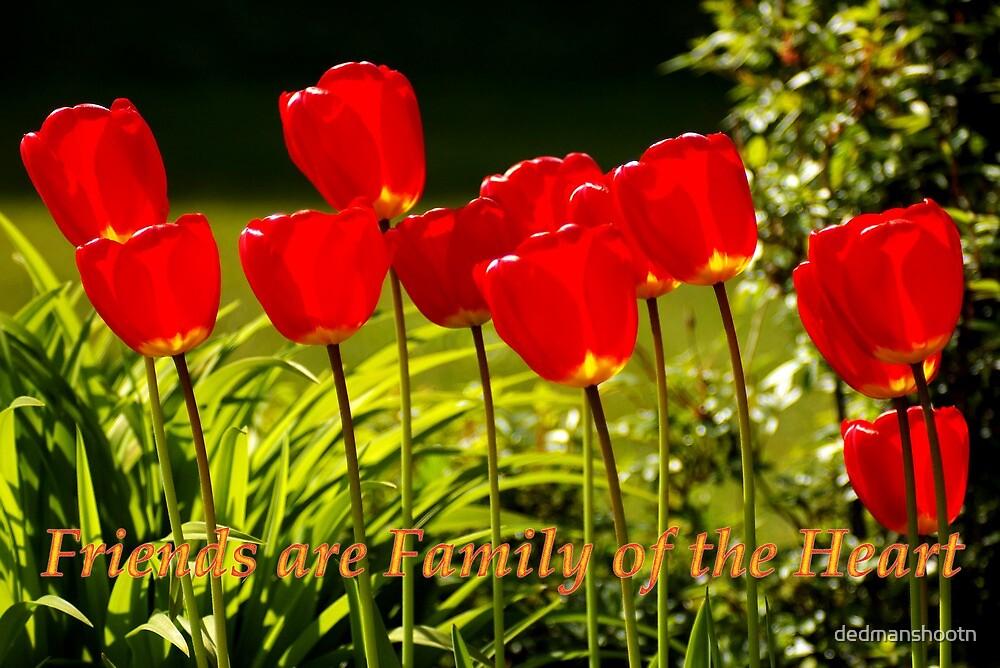 family of the heart tulips by dedmanshootn