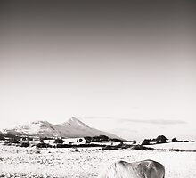 White horse on a snowy morning overlooking Croagh Patrick, Westport, Ireland by Ciaran  Duignan