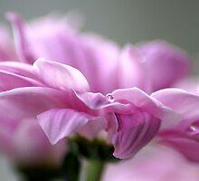 Pink mist.. by Joyce Knorz