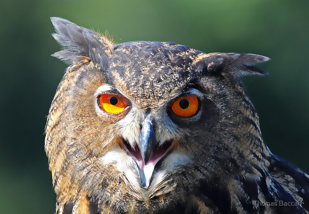 Hello My Name is Hoot. What's Your's? by TJ Baccari Photography