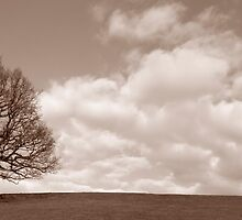 Lone tree  by StefanFierros