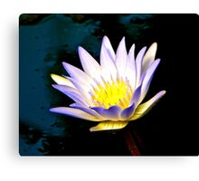 Purple Tipped Water Lily Canvas Print
