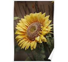 Tuscany sunflower Poster