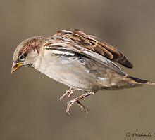 House Sparrow in flight by PixlPixi